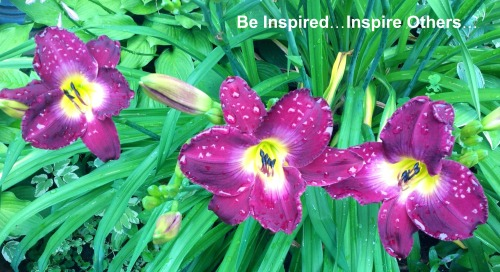 I am inspired by these flowers in my garden