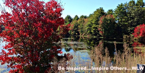 Autumn Red Tree and Pond 1